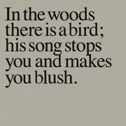 In The Woods There Is A Bird...