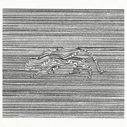 Ocelot Of Salvation